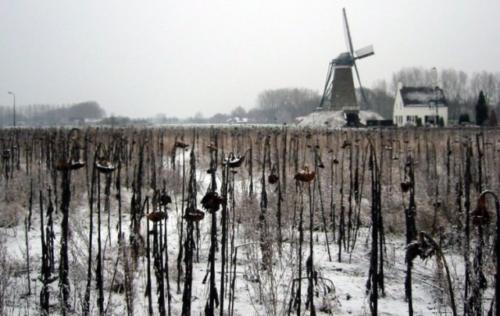 roosdonck-winter-06