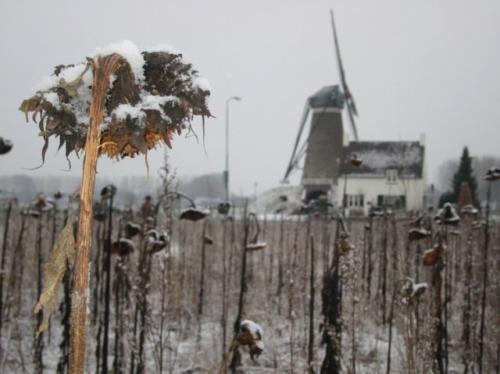 roosdonck-winter-08
